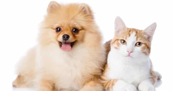 Happy pet integratore cani e gatti